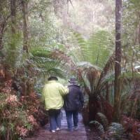 Rain Forest Walk_84